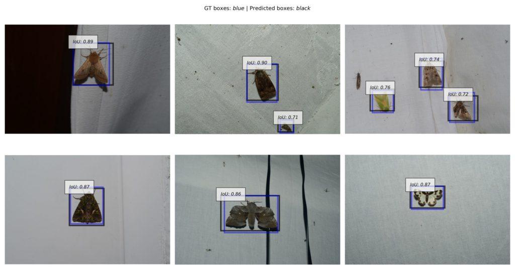Aufruf zum Aufbau einer Mottenbilder-Referenzsammlung